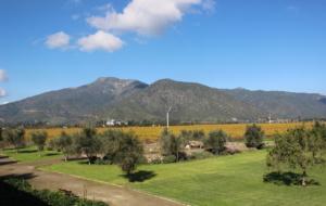 3 vinhedos para se conhecer no Chile