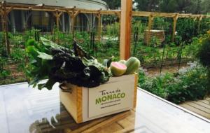 Mônaco, o exemplo de sustentabilidade