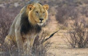 3 paisagens incríveis para se visitar em Botsuana