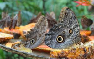 Natureza exuberante, principal atrativo da Costa Rica