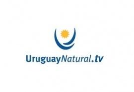 Conheça o Uruguai sem sair de casa